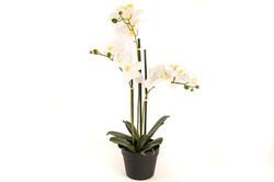 Mikasa Moor - Beyaz 3lü Yapay Orkide 65cm
