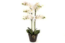Mikasa Moor - Beyaz 4lü Yapay Orkide 72cm