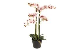 Mikasa Moor - Lila 4lü Yapay Orkide 72cm